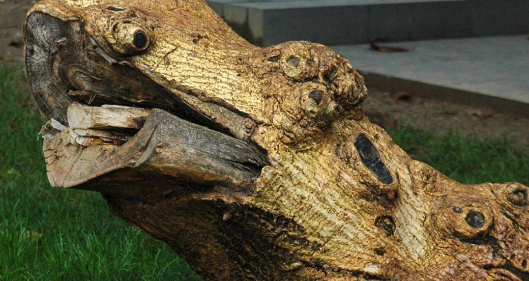 Matar termitas con productos caseros grupo julio diaz - Acabar con las termitas ...