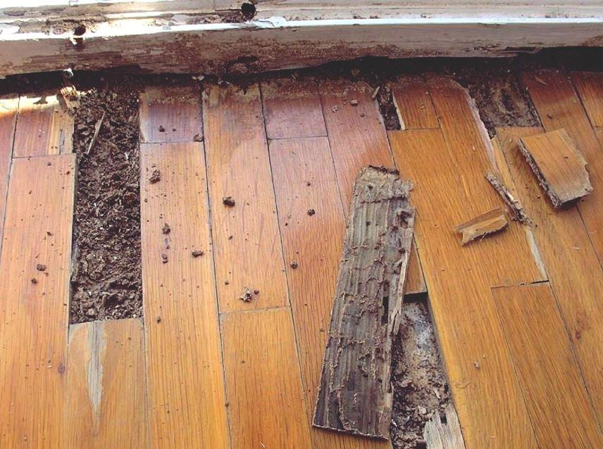 Matar termitas con productos caseros grupo julio diaz - Termitas en casa como matarlas ...